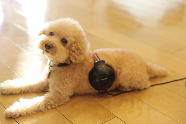 felic&Dog's Lakku
